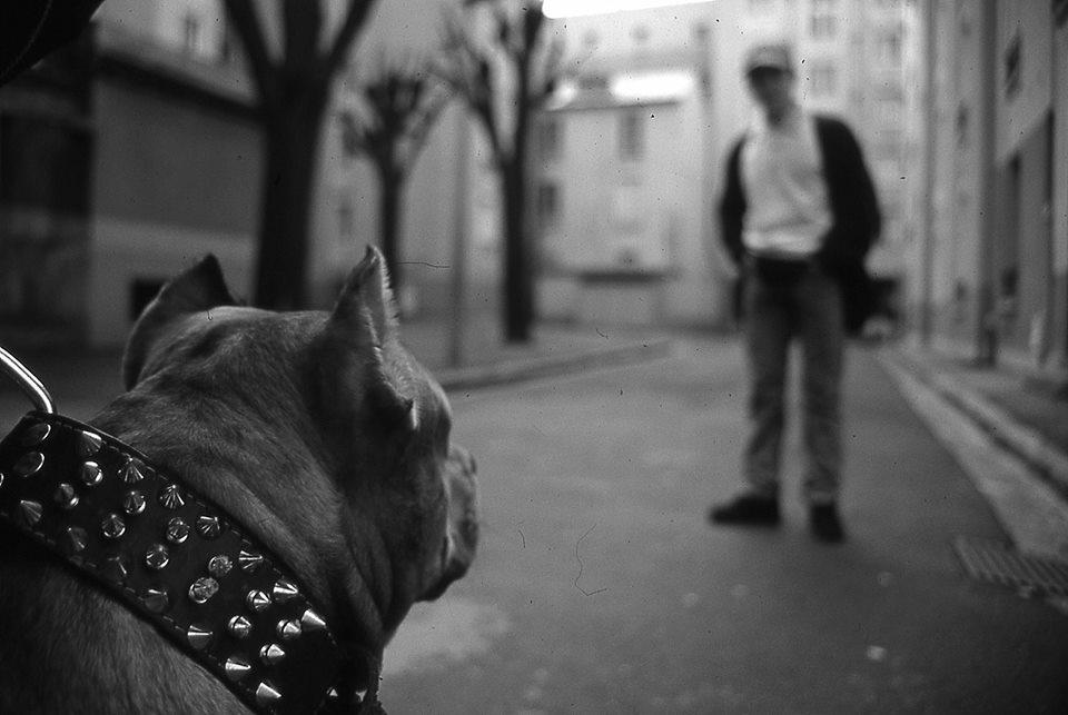 Pour Paris-Match Pitbull
